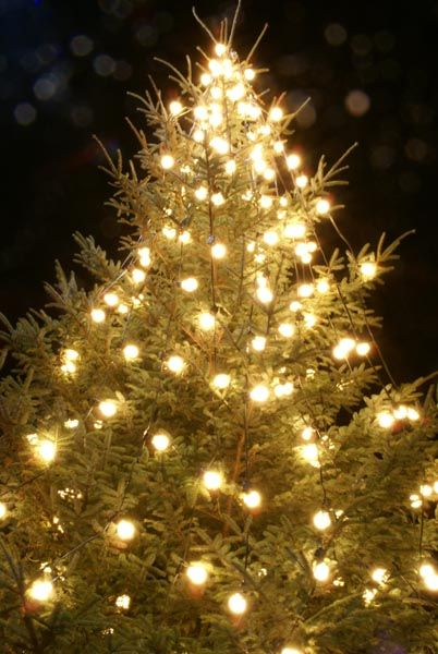 **CANCELLED**Mound Valley Tree Lighting Ceremony @ Old Mound Valley Community Center
